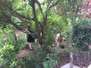 atelier jardinage maison de retraite