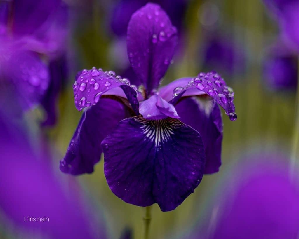 fleurs de saison hiver