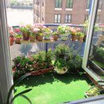 balcon juju