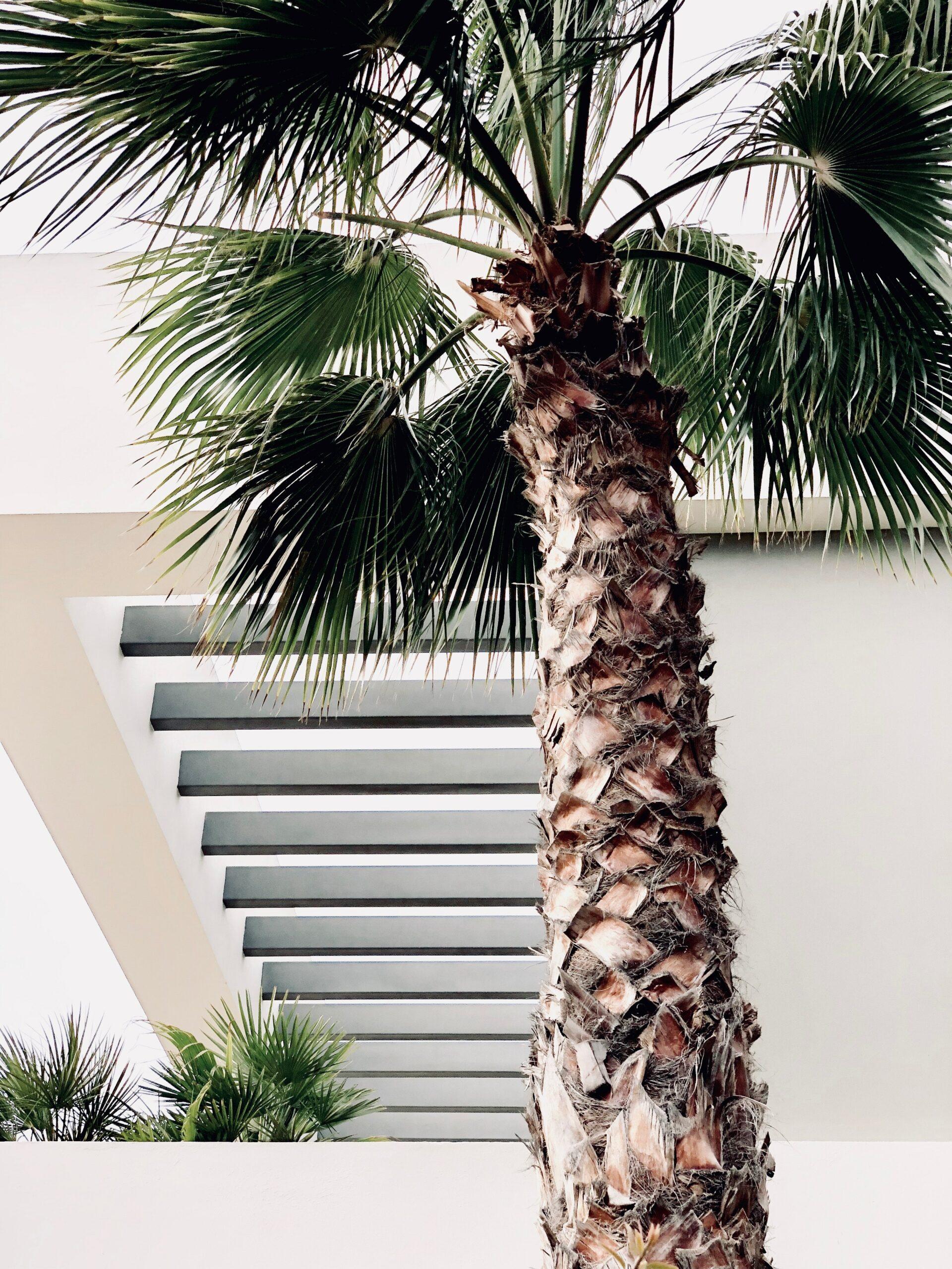 Comment planter un palmier ?