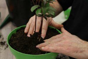 rempotage plante