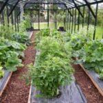 semis sous serre